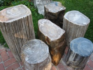 petrified_wood